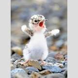 Cute Baby Dinosaurs Tumblr   450 x 623 jpeg 37kB