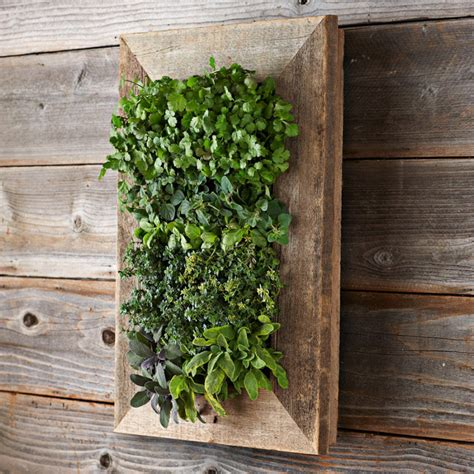 Green Wall Planters by Reclaimed Barn Door Vertical Wall Planter The Green