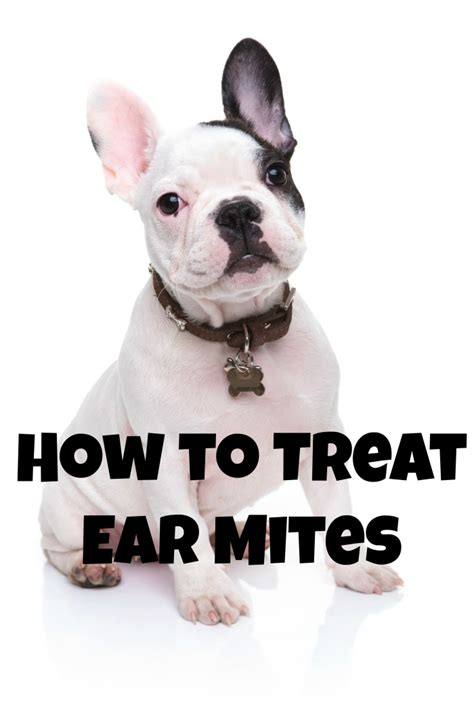 what do ear mites in dogs look like how do i treat my s ear mites dogvills