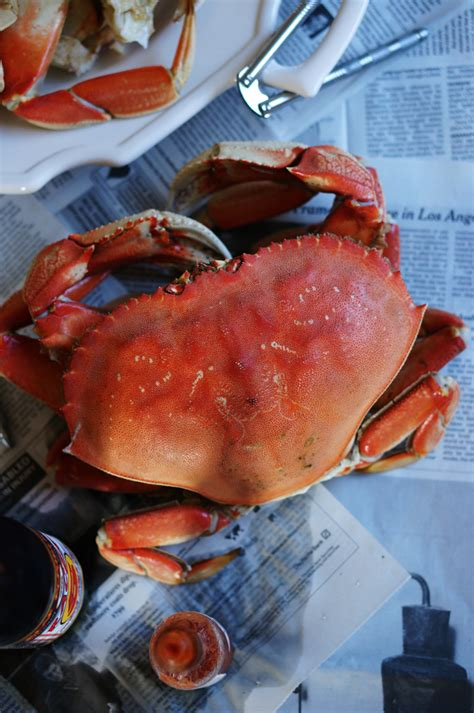 5 titillating crab recipes mollie s kitchen