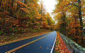 Long road in the forest hd desktop wallpaper widescreen high