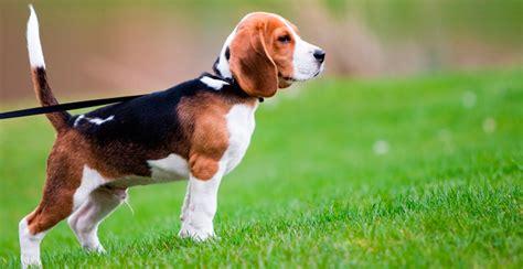 imagenes abstractas de un perro imagenes de ba 241 o de perros dikidu com