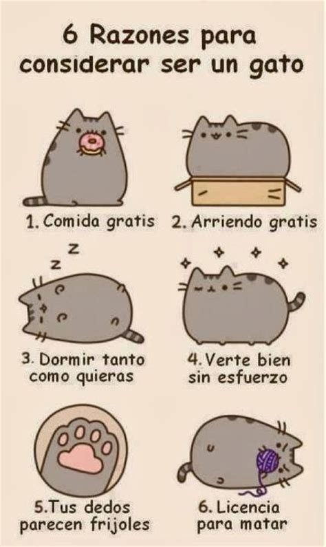 imagenes kawaii de gatos estado kawaii cat kawaii