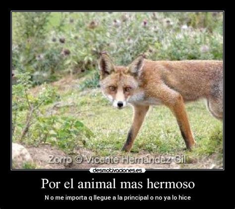 imagenes kawaii de zorros por el animal mas hermoso desmotivaciones