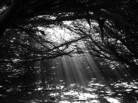 black and white woods wallpaper black and white woods by silent broken wish on deviantart