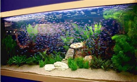 aquarium design for guppies guppy aquarium aquarium guppy freshwater aquarium