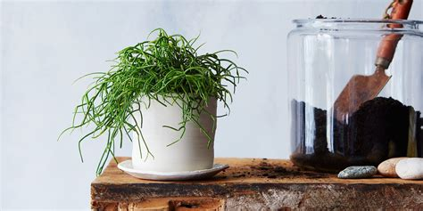 how to bring a dead plant back to life 7 common houseplant afflictions and how to cure them all