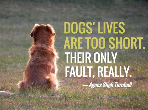 puppy died 13 loss quotes comforting words when losing a friend