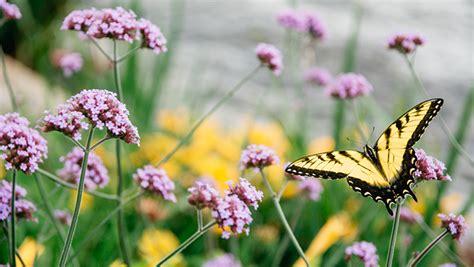 flower garden with butterflies how to attract butterflies ftd