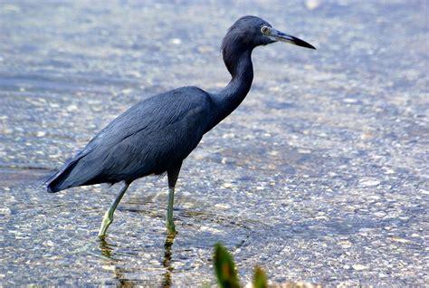 birds for in florida birds of prey