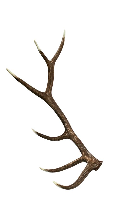 Elk Antler Shed by Elk Sheds Antler Clip Clipart Collection 8