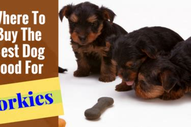 best food for yorkies at walmart labrador hq everything labrador retriever