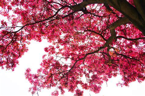 Blossom Shieneng 10 amazingly free stock photo napkinbetabeyond fast forward