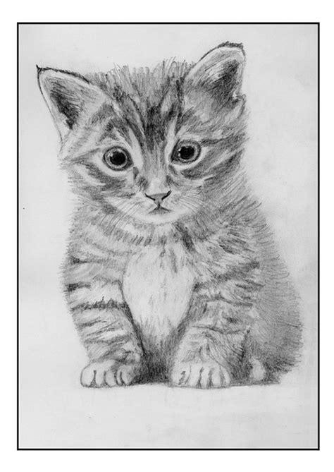 imagenes a lapiz de gatos imagenes de gatos dibujos a lapiz