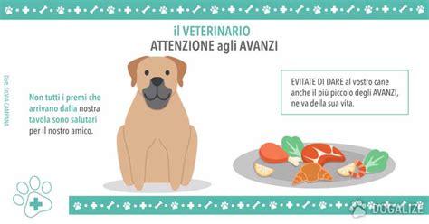i 5 alimenti da evitare alimenti per cani da evitare dogalize