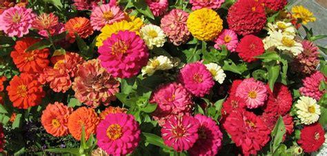 Popular Garden Flowers Popular Flowers U S Gardeners Top 5 171 Bombay Outdoors