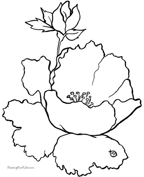 coloring pages of animals and flowers free flower coloring sheets 018