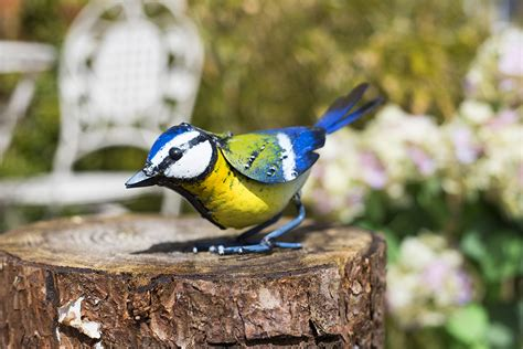 How To Keep Birds Patio by Birds That You Should Out For In Your Garden This Winter