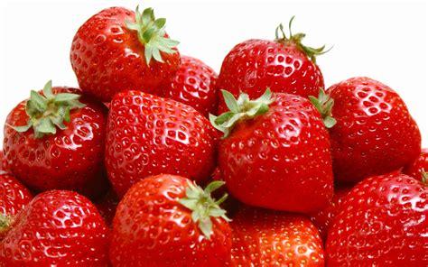 Pupuk Buah Hormonik 100 budidaya strawberry panduan budidaya agro