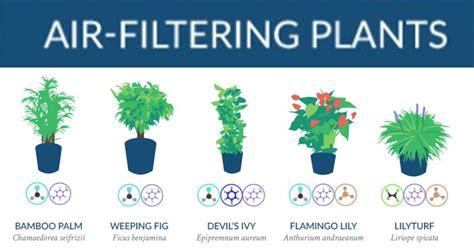 nasa best plants best houseplants indoor plants for low light 18 best