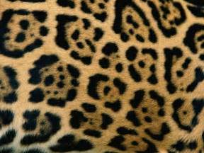 Jaguar Print Animal Pattern Photos Picture Gallery Desktop Wallpaper