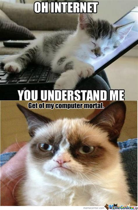 Cat Internet Meme - internet meme cat www pixshark com images galleries