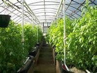 membuat rumah green house cerita seputar green house rumah kaca polimer plastik