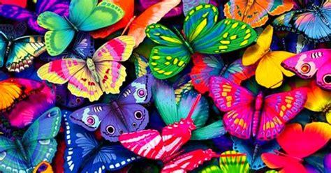 gambar kupu kupu  cantik  indah kumpulan gambar