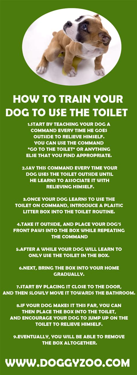 how to train your dog to use bathroom outside how to train your dog to use the toilet doggyzoo