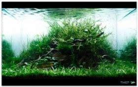 Aquascape Tanpa Pupuk Dasar Dan Co2 cara membuat aquascape aquajaya