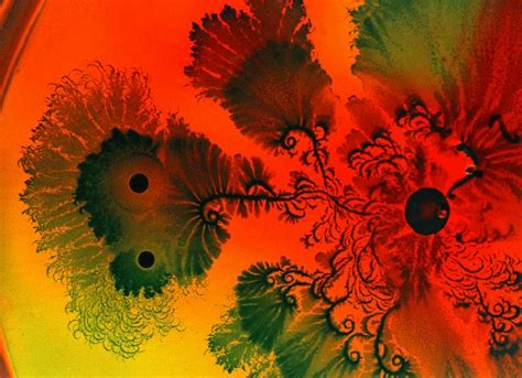 patterns in nature documentary patterns in nature fractals jessica crabtree