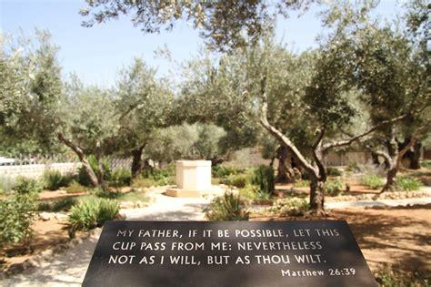 giardino dei getsemani terra santa il getsemani e il monte degli ulivi