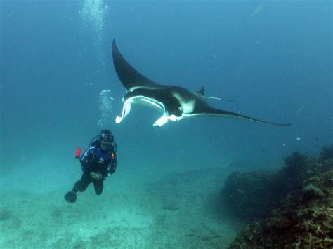 dive trip sail ningaloo sail ningaloo scuba diving liveaboard dive