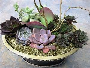 diy succulents how to make a succulent dish garden step by step tutorial balcony garden web