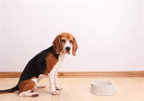 recalled dogs what to do if your s food is recalled american kennel club