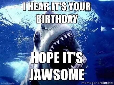 Funny Shark Meme - 25 best images about humor is the cure on pinterest