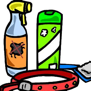 come eliminare le pulci da casa come eliminare le pulci dalla casa arrangiamoci