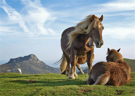 it s hd animals funny wallpapers amazing pictures of nature it s hd animals funny wallpapers amazing animal wallpapers