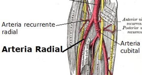 jessica 2013 ramas de la filosofia marzo 12 2013 de slideshare la arteria recurrente radial posteriores es una rama de la