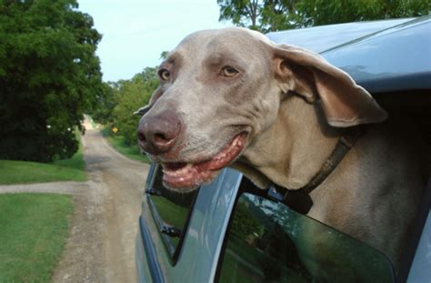 road dogs 8 gadgets for a friendly road trip healthy paws