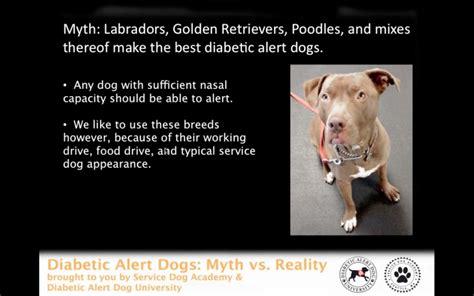 diabetic service dogs diabetes service academy service and pet
