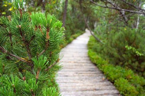 Evergreen Garden by Evergreen Garden Related Keywords Suggestions