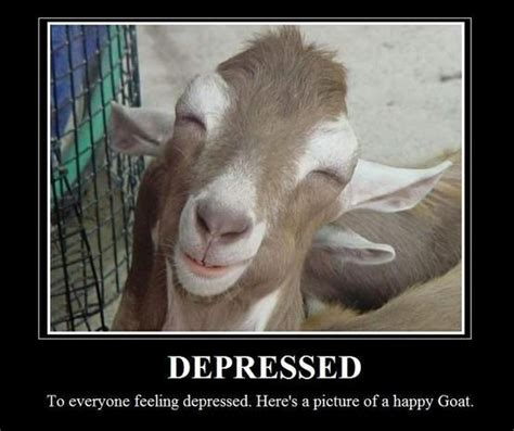 Happy Goat Meme - happy smiling goat jokes memes pictures