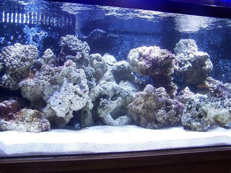 reef aquascaping designs gallon bonsai aquascaping
