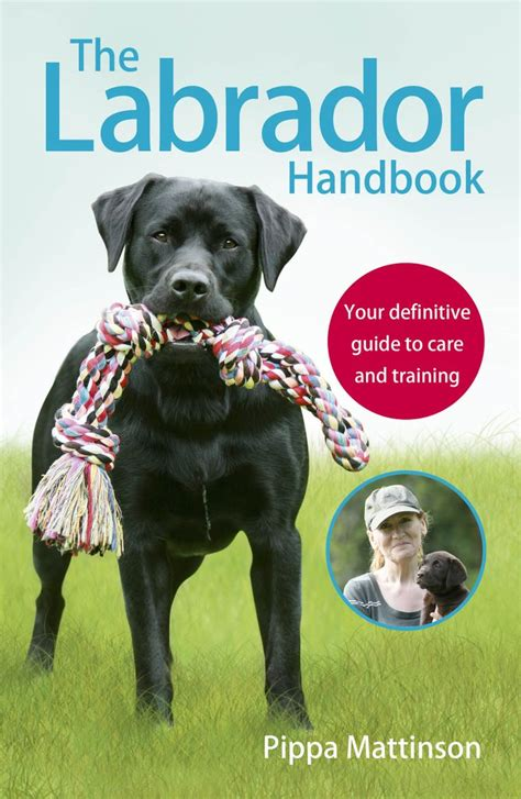 how to your to stay in the cage 17 best ideas about labrador puppies on labrador puppies chocolate