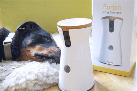 hund pinkelt in wohnung wenn er alleine ist furbo im test kann eine hundekamera den hund besch 228 ftigen