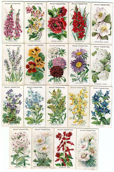 list of garden plants garden ftempo