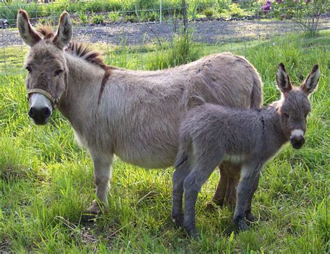 donkey pictures kids