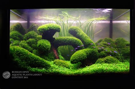 Aquascape Aquarium by Aquarium On Aquascaping Nano Aquarium And