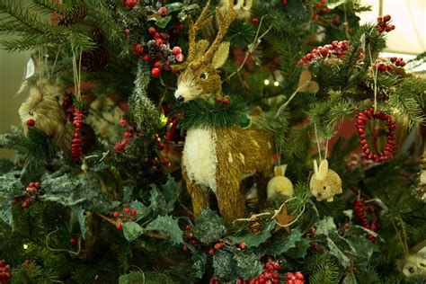10 festive plants that bring christmas alive perfect plants